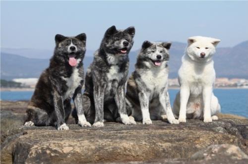 4 perros
