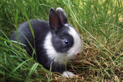 conejo ronroneando