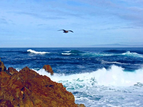 gaviota mar playa